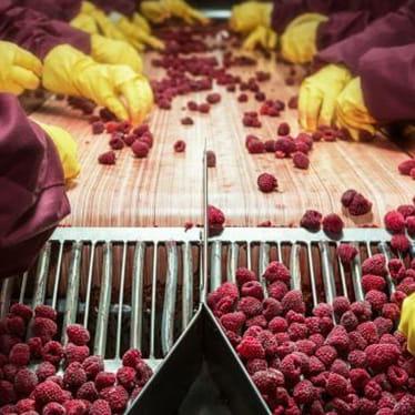 Fresh produce sector
